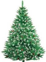 Julgran hos Oppmanna Plantskola i Arkelstorp